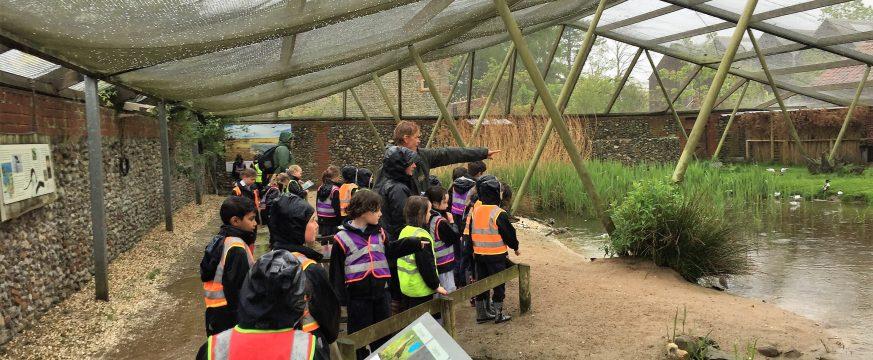 Year 2 visit Pensthorpe Natural Park