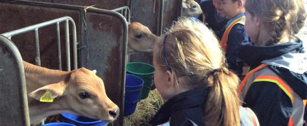 Year 2 visit Norton's Dairy