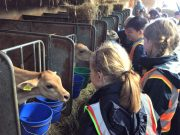 Year 2 visit Norton's Dairy